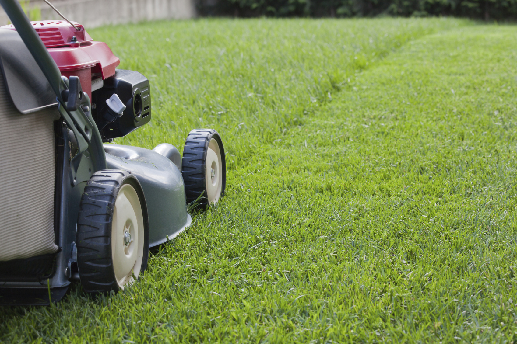 Grass cutting rays garden service for Lawn care and maintenance