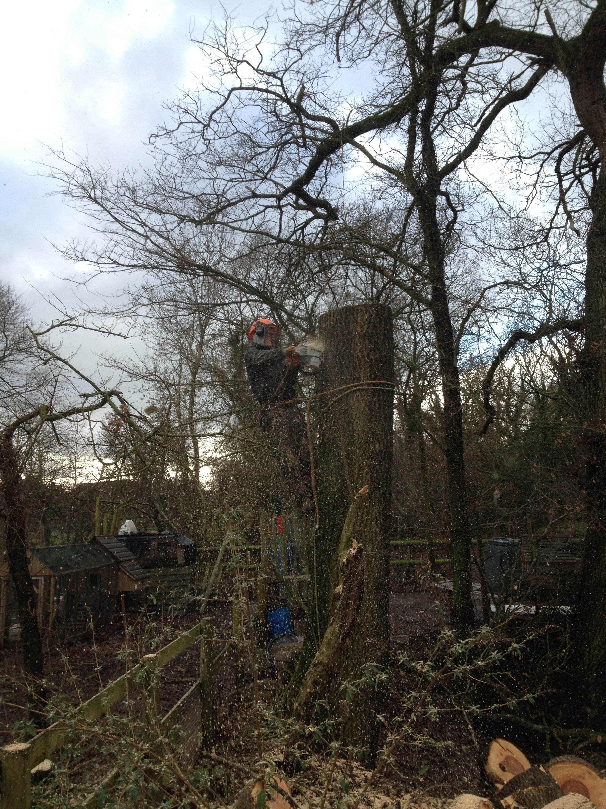 Tree services rays garden service for Tree and garden services